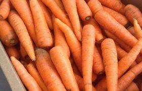 cenoura orgânica leve bem delivery sp