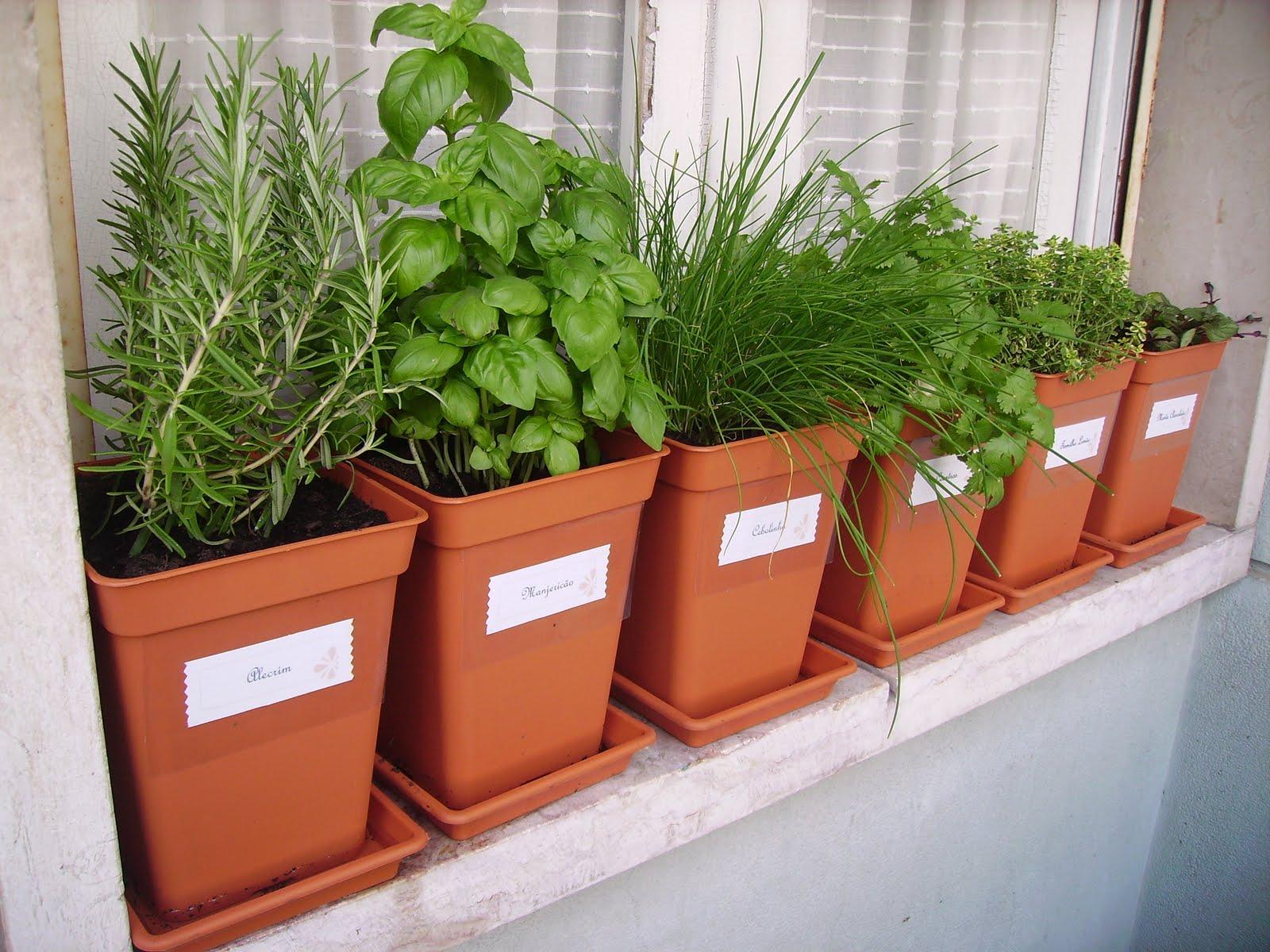 horta e jardim juntos:Cultive em casa o seu chá! – Leve BEM – Delivery de Orgânicos